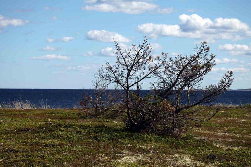 остров Красный, кусты