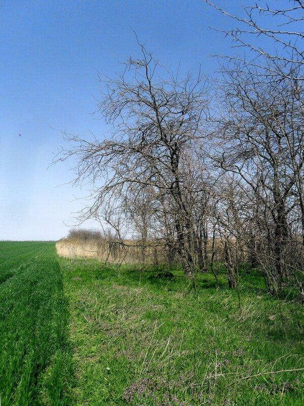 Земля, апрельским солнцем напоённая, ковёр зелёный сотворяет свой ... SAM_6177.JPG