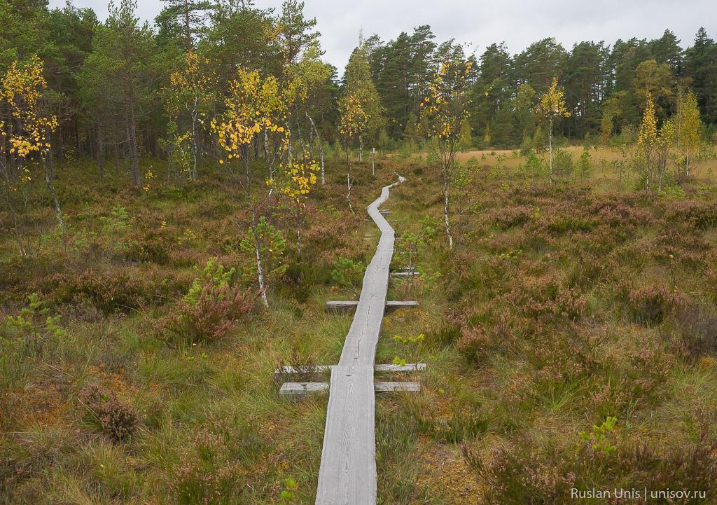 Metsähallitus