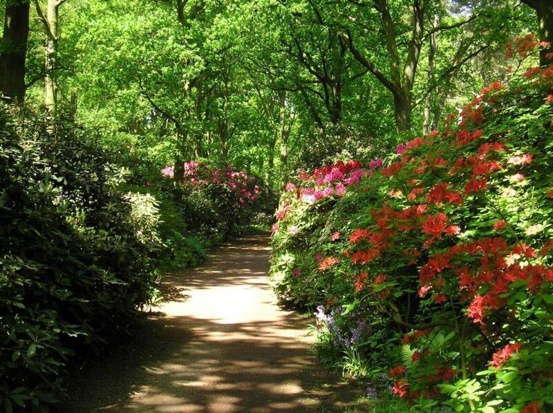 японский сад Клингендаль в Гааге