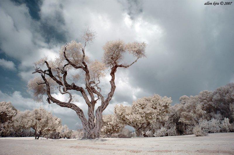 Allon Kira - инфракрасные фотографии