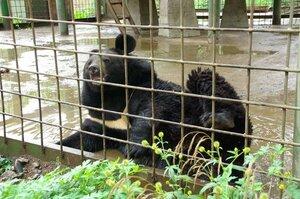Такого ещё не было: в зоопарке Уссурийска - беби-бум