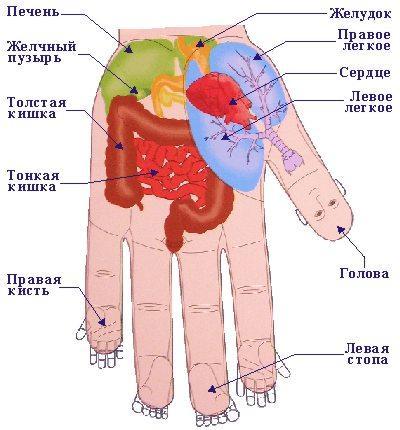 медиков) Руки - кладезь
