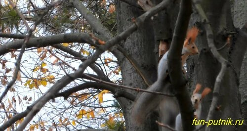 Белки в осеннем парке