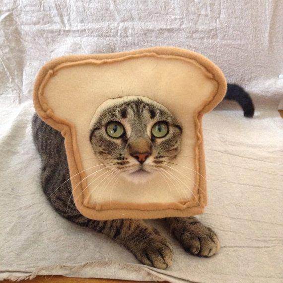 7. Костюм для кошки. Теперь она хлеб