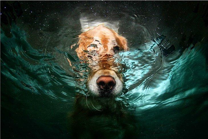 В один из таких моментов фотограф подумал: «Интересно, а как он выглядит под водой?»