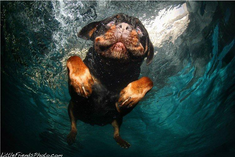 И все эти позитивные снимки сполна демонстрируют всю гамму собачьих эмоций.