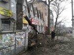 Удаление деревьев; Кронирование деревьев;Удалить дерево;Обрезка дерева;Спарта-Лесоруб;Арбордисты;Удаление дерева по кусочках;Удаление деревьев с подвязками;Спиливание деревьев на кладбище