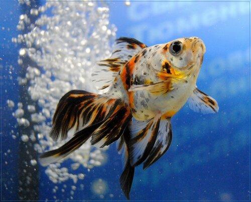 ...персональную золотую рыбку, чтобы все желания исполнялись!