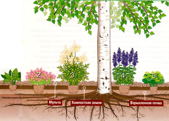 посадки под деревьями