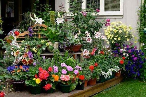 Какие красивые цветы посадить дома