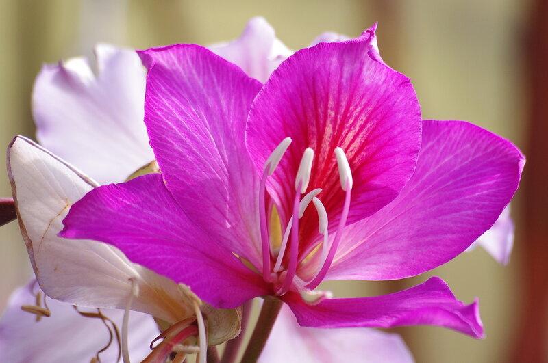 Свадебные, израиль цветы