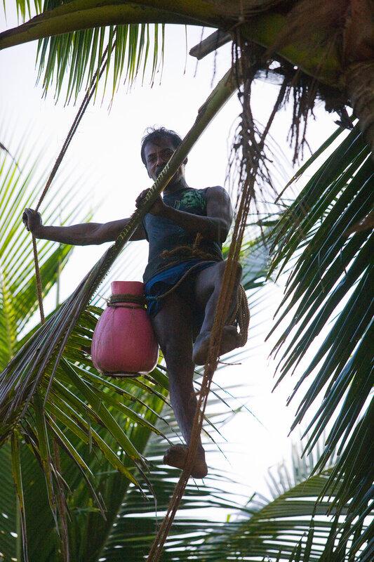 Собиратель кокосов