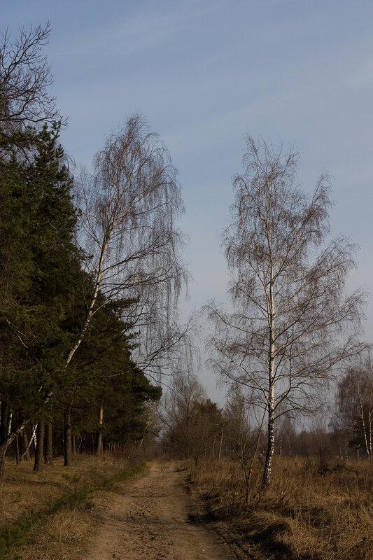 Дорожка вдоль лесополосы