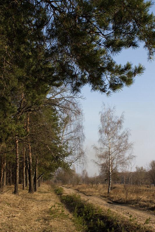 Пейзаж у сосны