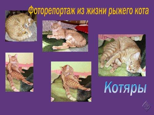 Фоторепортаж из жизни рыжего кота