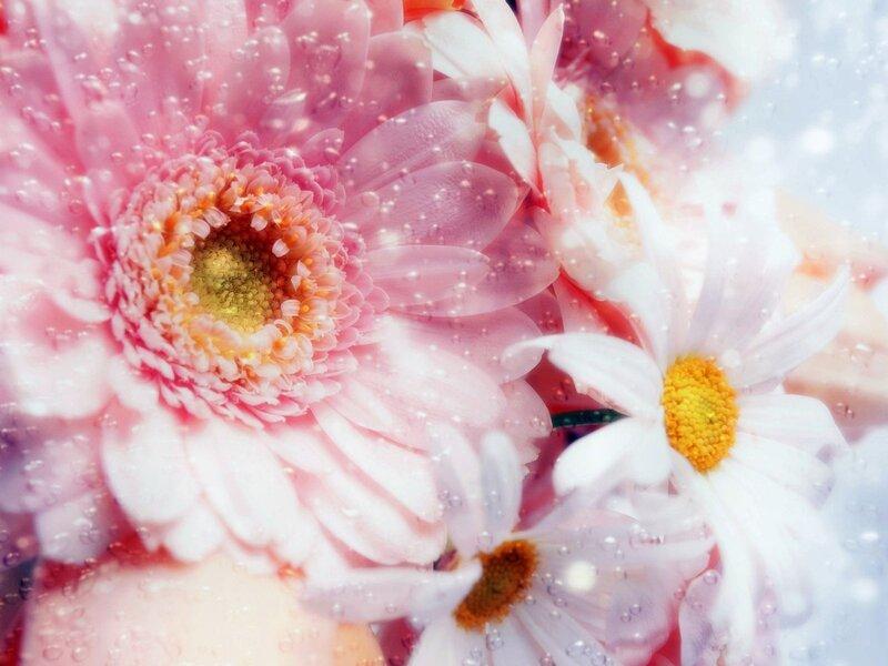 цветочные фоны,фоны,обои,цветы