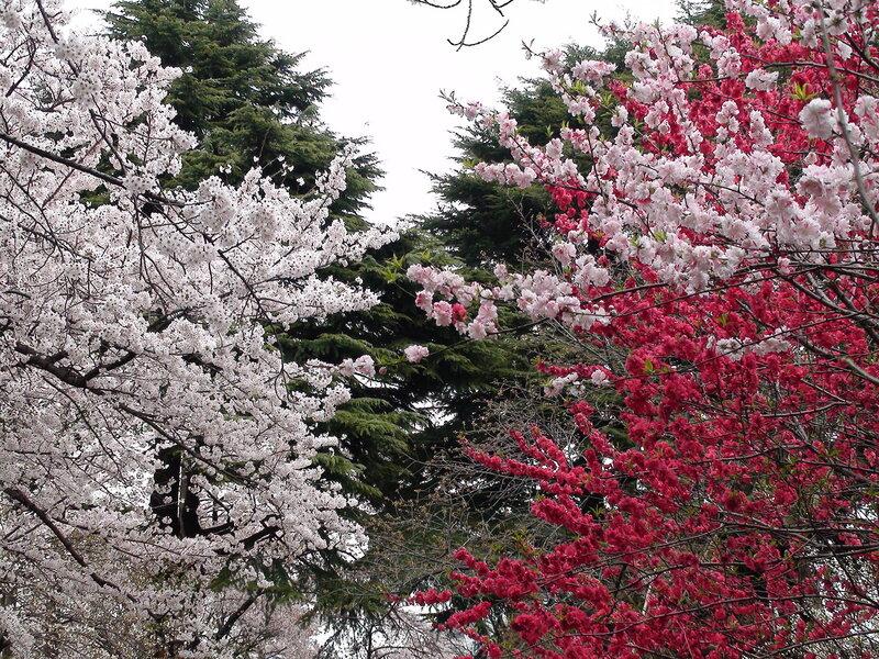 сад Синдзюку Токио
