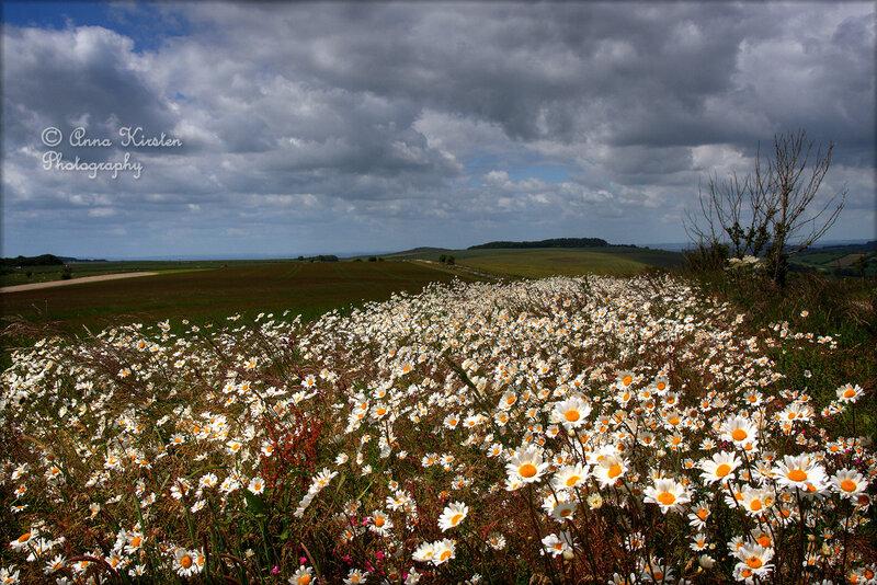 Фотографии природы и животных от Anna Kirsten