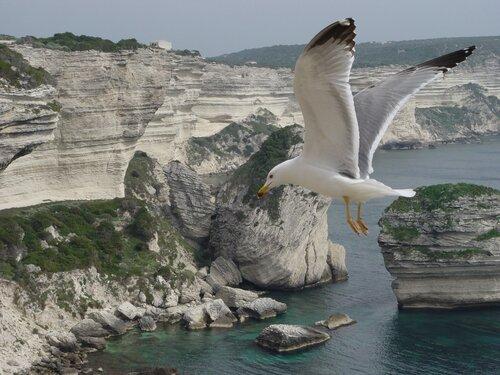 Свободный полёт