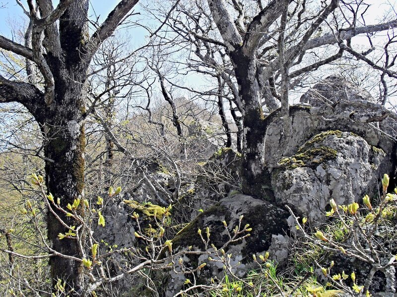 Весна среди скал и деревьев