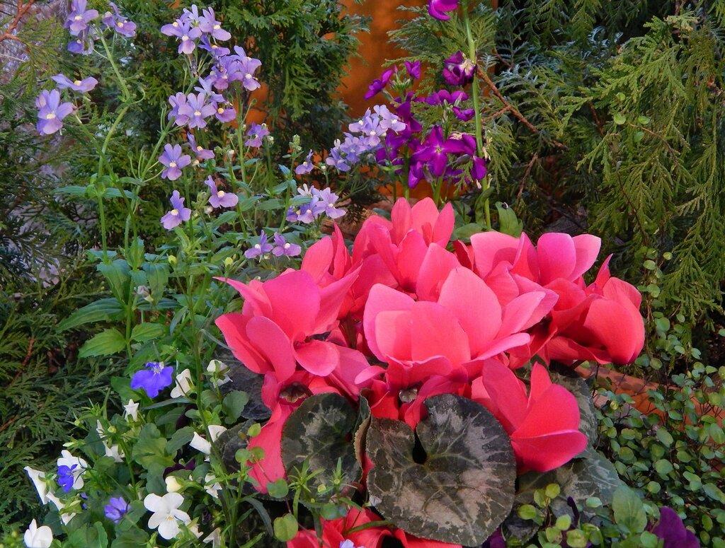 Весенняя выставка цветов-2016.