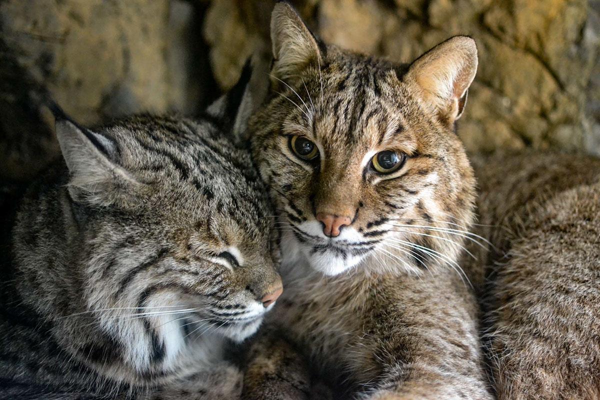 Красивые животные / Christa Lam