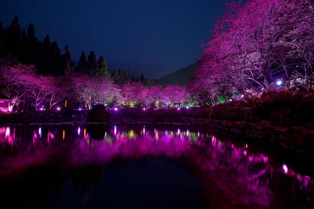 Праздник цветения сакуры на Тайване. Прекрасная деревня Формосан 0 1607a2 68c8579c orig