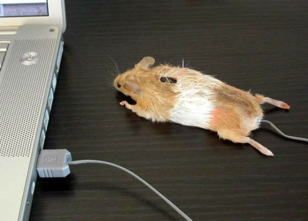 Креативные компьютерные мышки (25 фото)