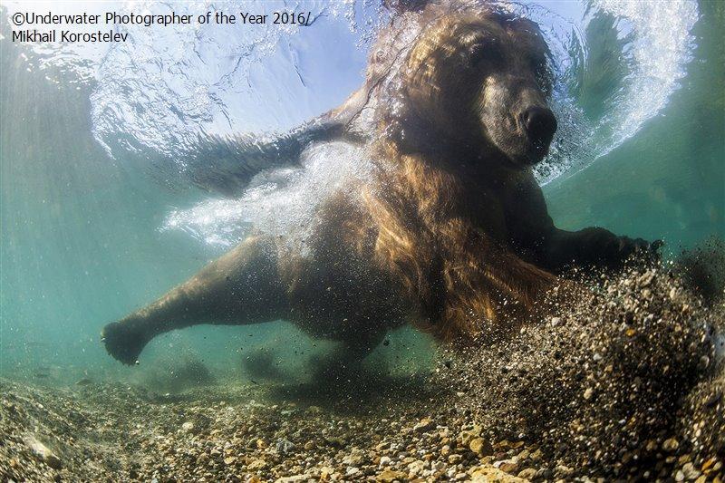 5. Первое место в категории широкоугольной съемки занял Михаил Коростелев за фото медведя, ловящего