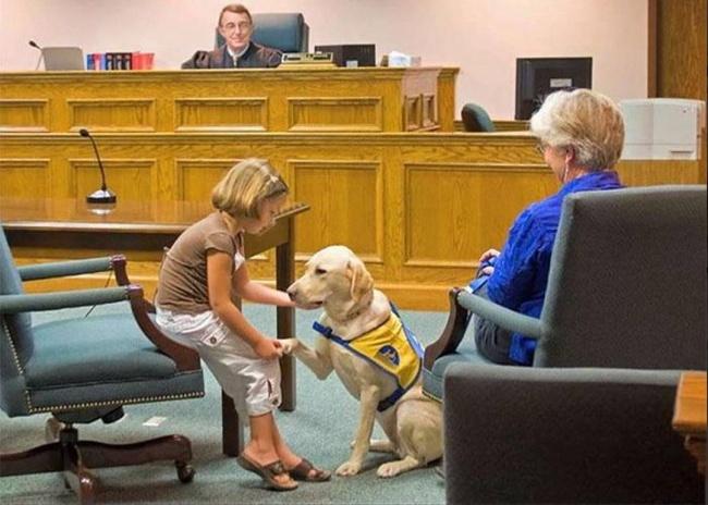 Эта собака снимает стресс назаседаниях всуде. Она помогает детям найти всебе смелость говори