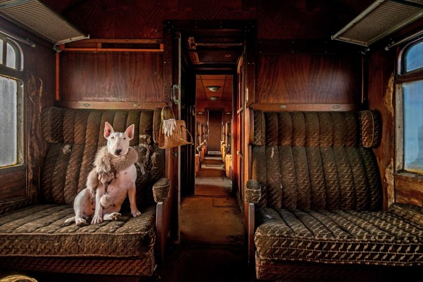 «Это мой бультерьер Клэр позирует в заброшенном поезде. Снимок из серии, над которой я работаю в нас