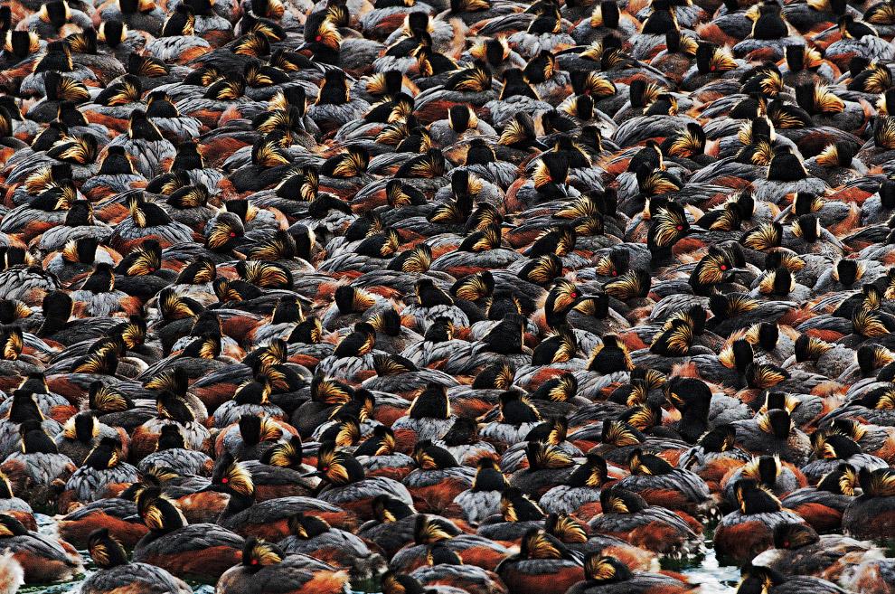 16. Деловой рыжий кривоклювый пересмешник. (Фото Hector D. Astorga | Audubon Photography Awards