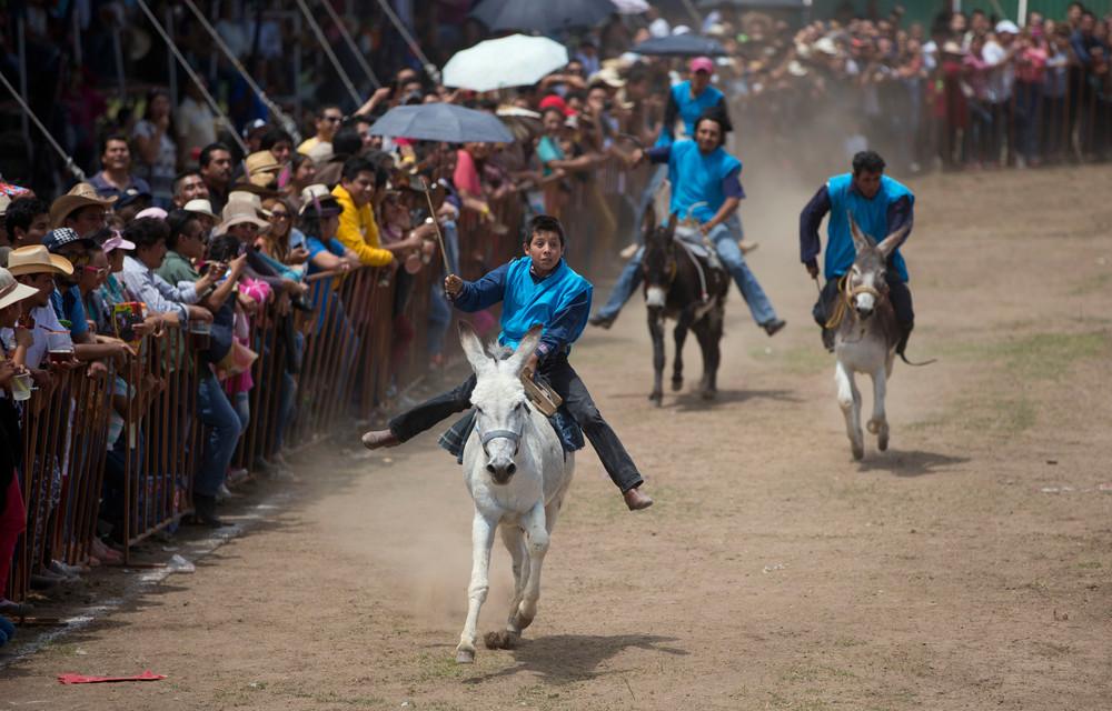 Фестиваль ослов в Мексике (10 фото)