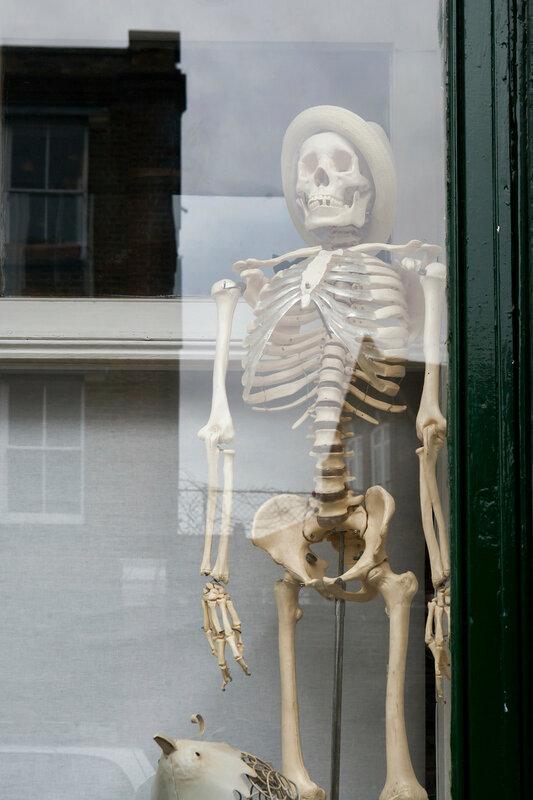 stylish skeleton with skull in hat