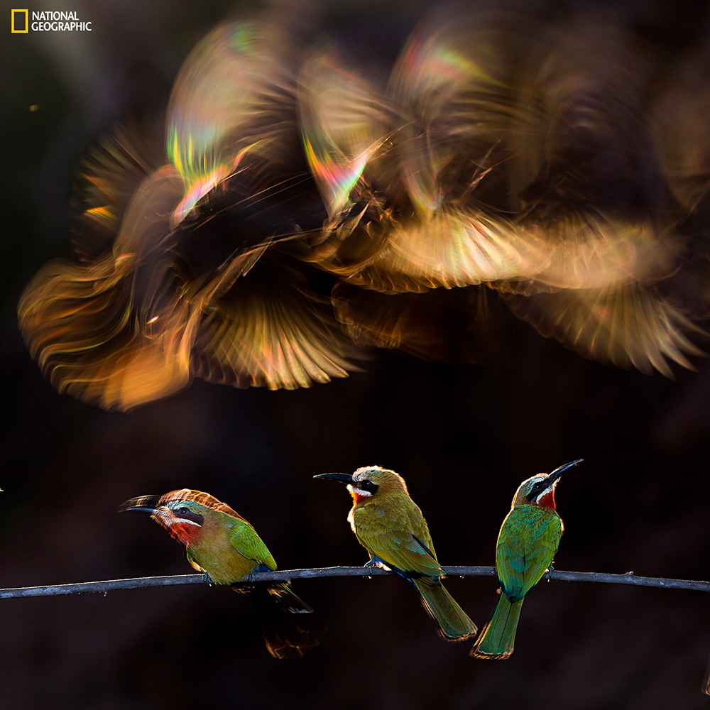 "Honorable mention. Photo and caption by Bence Mate / National Geographic 2015 Photo Contest. ""Colorf"