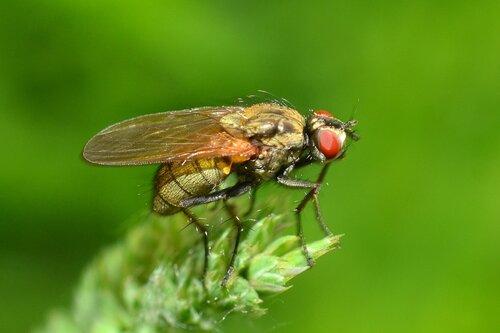 Просто муха на травинке ...