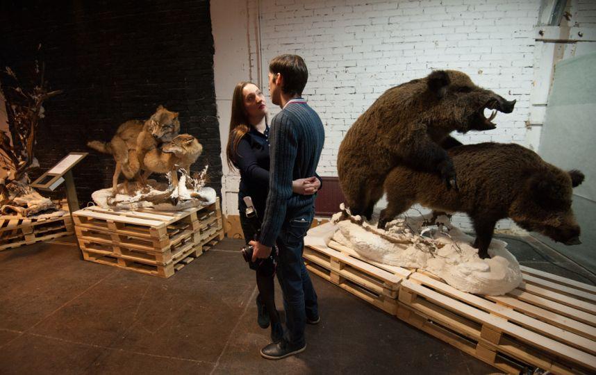 Титикака выставка санкт петербург