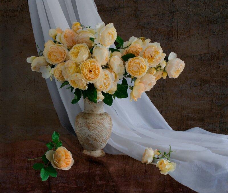 Мои любимые жёлтые розы