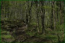http://img-fotki.yandex.ru/get/42618/15842935.2c1/0_e2959_8f28c7d_orig.png