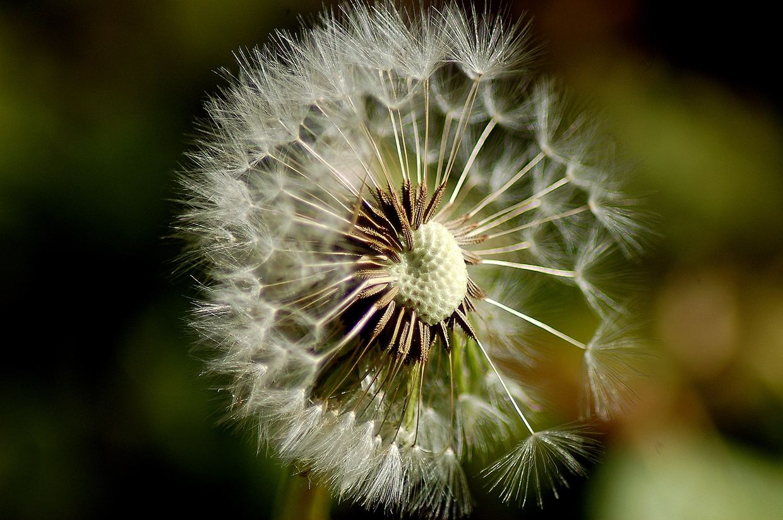 Make a wish... or two by Zuzana Slancikova