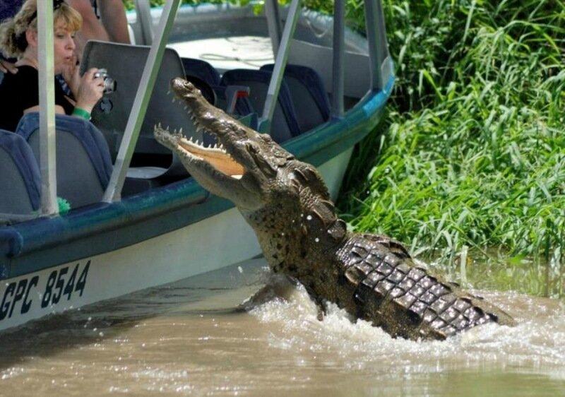 Любительница острых ощущений прыгнула в вольер с быстрым крокодилом