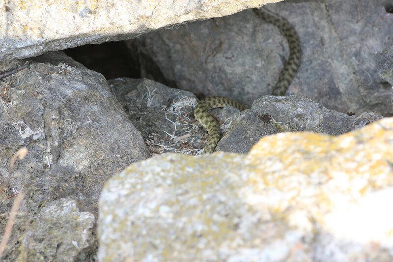 Змеи на пирсе