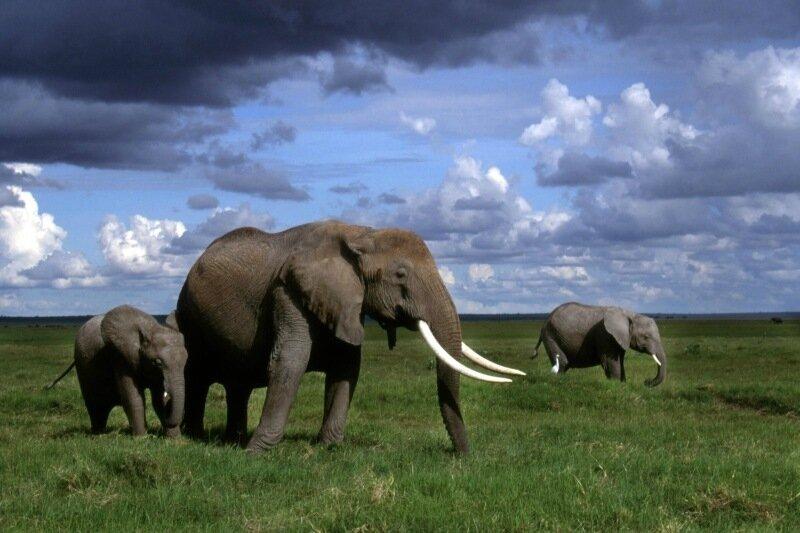 Факты и фотографии: как живут слоны в неволе