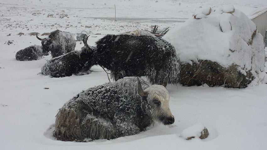 7. Лхюндзе, Тибет 2008 — 182 сантиметра снега Несмотря на то, что Тибет — место, где довольно прохла