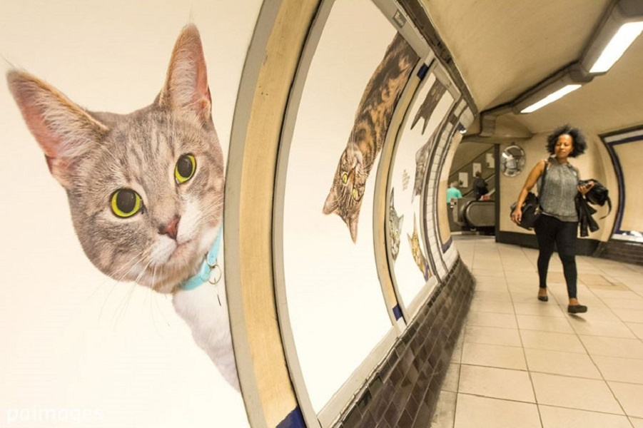 Захват мира по-кошачьи