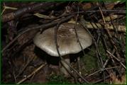 http://img-fotki.yandex.ru/get/42692/15842935.385/0_eaddd_da4bb544_orig.jpg