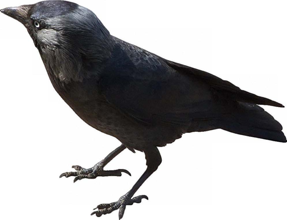 стихания картинка воробья голубя вороны это мое такое