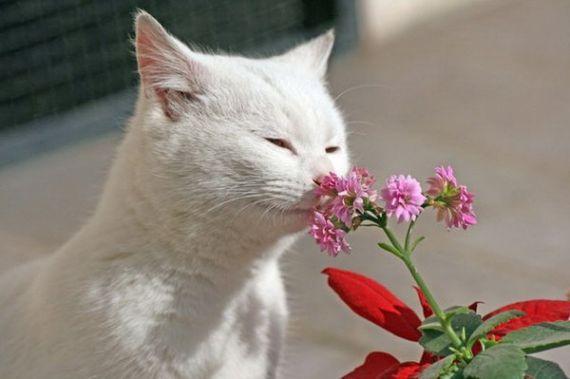 Кошка способна служить своеобразным индикатором благополучия человека. Когда в нашей жизни всё в