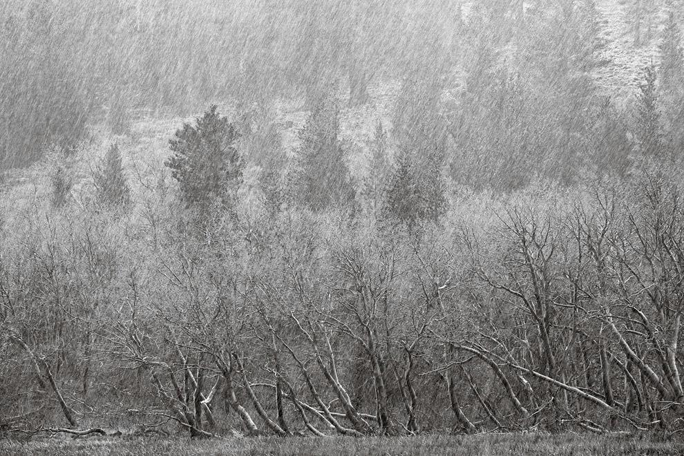 Одинокое растение в снегу. (Фото Peter Essick):